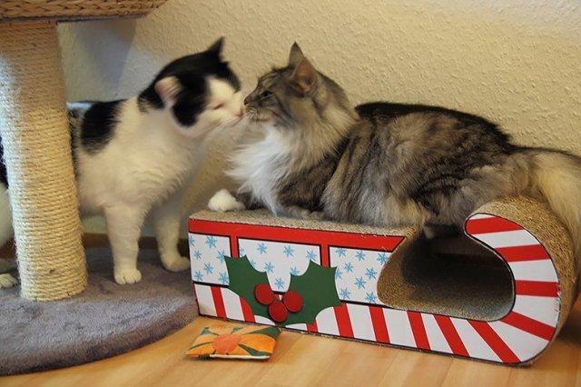 Robbie und Loki geben Küsschen